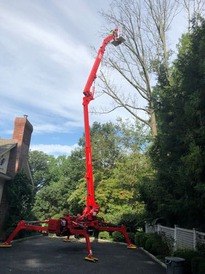spider lift removing dead ash tree